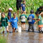 Students harvesting taro on a field trip