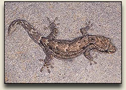 Guardian Geckos - History, Facts & Lore Behind Hawaiian Geckos